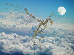 ハーピー in the sky